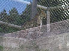 fuji_safari4.jpg